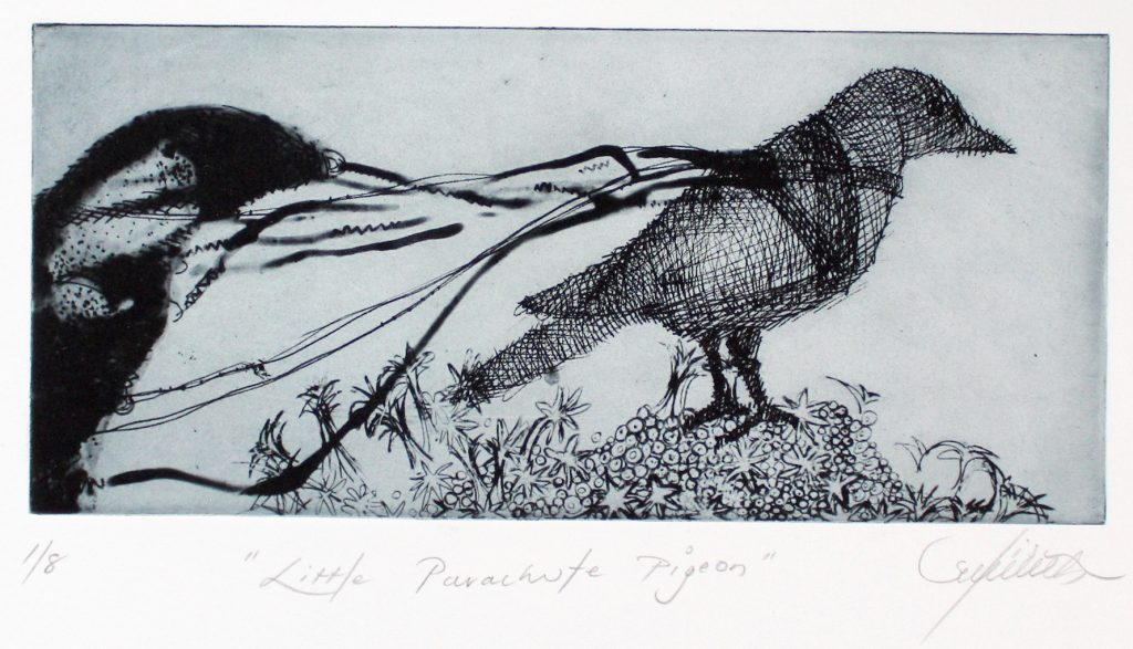 Lisa Sewards Little Parachute Pigeon
