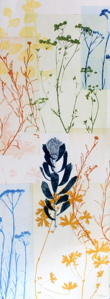 Trudy Rice - Blue Pincushion Protea in the garden