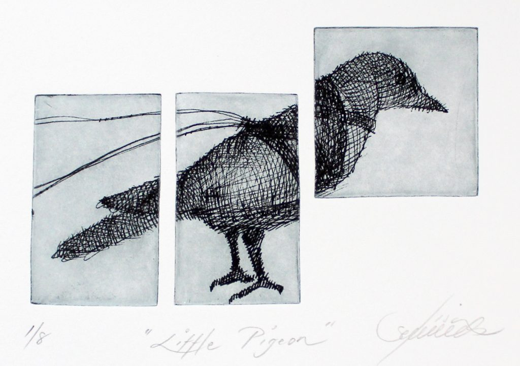 Lisa Sewards, Little Pigeon