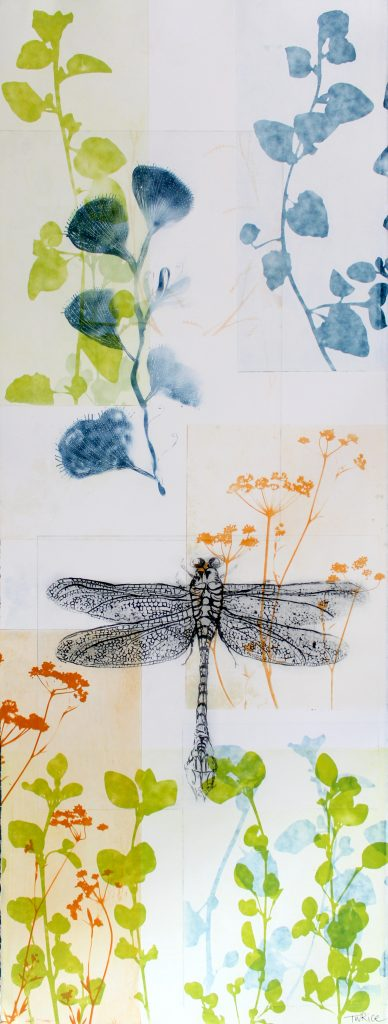 Trudy Rice - Large Dragonfly with Blue Hakea in the garden