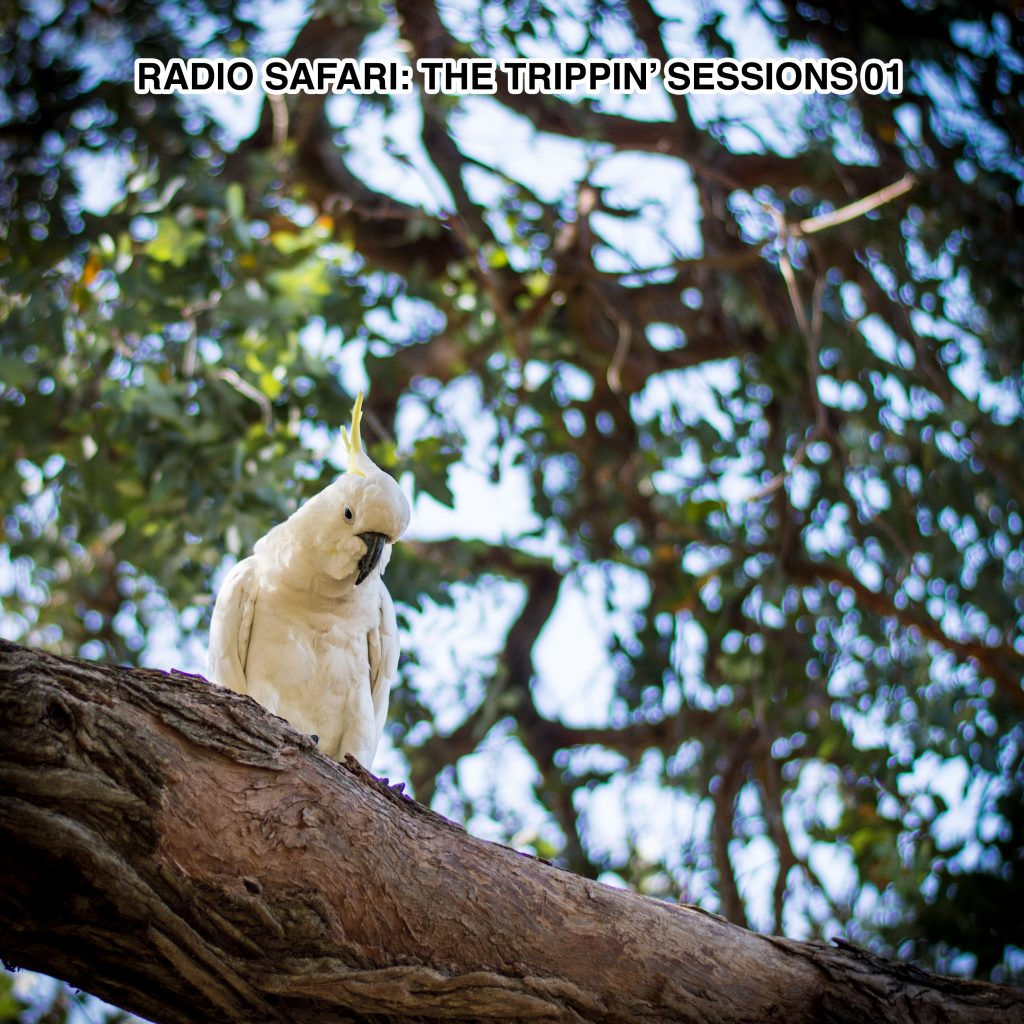 Niccolò Tramontana, Radio Safari Trippin\' Sessions